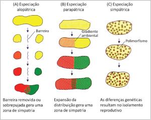 Figura 3. Estágios dos três modelos de especiação de acordo com sua configuração geográfica. A) Especiação alopátrica. B) Especiação parapátrica. C) Especiação simpátrica. (Adaptado de Futuyma, 2005).