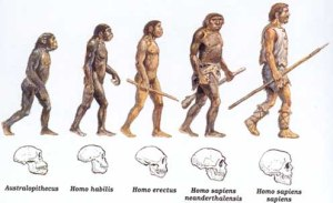 evoluc3a7c3a3o-1